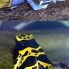 10 Найнебезпечніших тварин планети