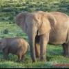 15 Цікавих фактів про слонів