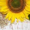 Насіння соняшнику - смачний джерело корисних речовин