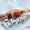 Coca-cola випустила пляшку, зроблену повністю з льоду (8 фото + відео)