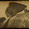 Камінь даваско (4 фото)