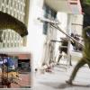 Леопард на вулицях міста мератх, індію (6 фото)
