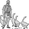 Свято гусячого пера