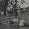 Найвідоміший тигр в світі - чампаватская тигриця, яка вбила 436 осіб