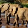 Слони: цікаві факти