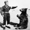 Тварини на війні (6 фото)